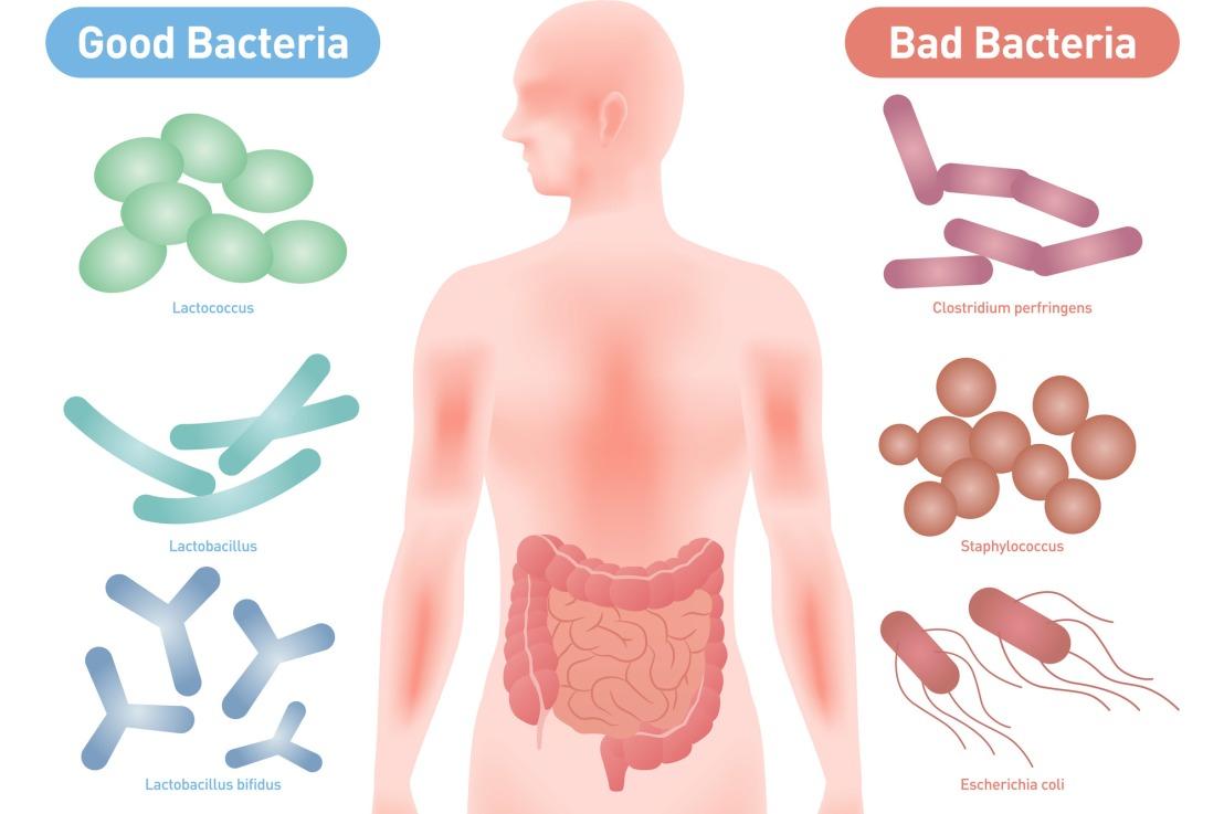 什麼是益生菌?與乳酸菌有何差別?